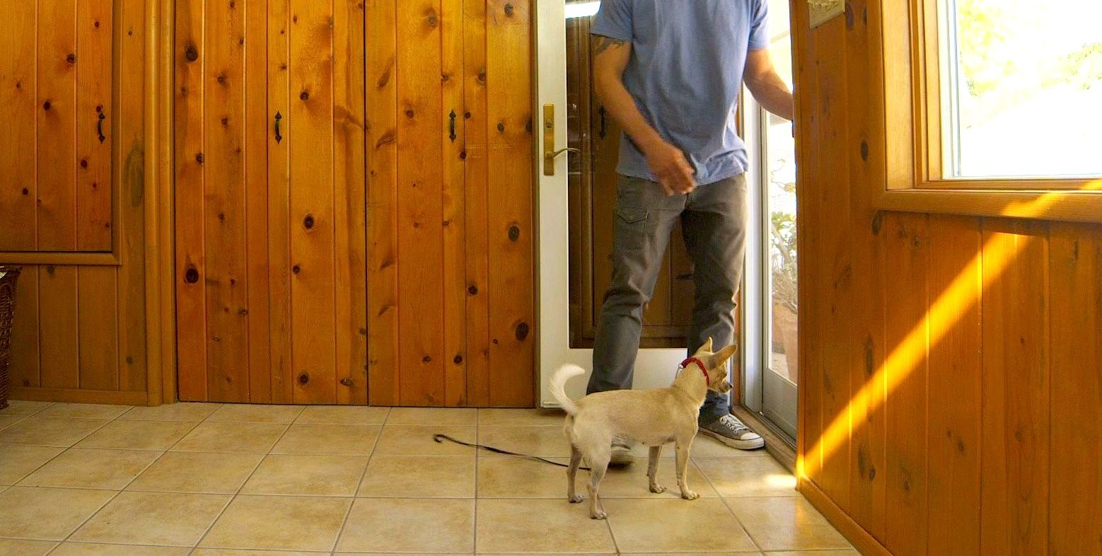 How to prevent dog from running out front door