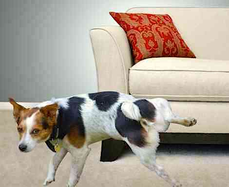 Admirable Brandon Mcmillans Canine Minded How To Stop Your Dog From Frankydiablos Diy Chair Ideas Frankydiabloscom