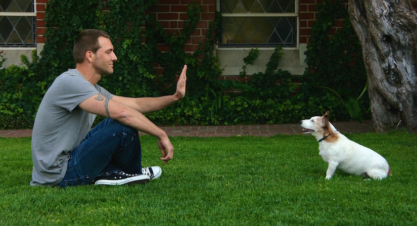 Brandon Mcmillan S Canine Minded How To Teach Your Dog To Stay