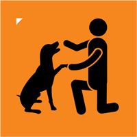 Dog Training Inquiries